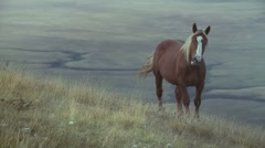 Horse in the wilderness Stock Footage