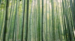 Green bamboo garden Stock Footage