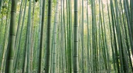 Stock Video Footage of Green bamboo garden