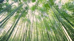 Green bamboo garden - stock footage