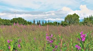 Stock Video Footage of Wind Turbine over Fireweed Meadow 1a