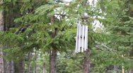 Stock Video Footage of Wind chimes on spruce trees