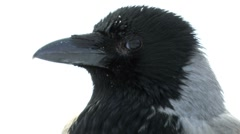 Crow ultra close up Stock Footage