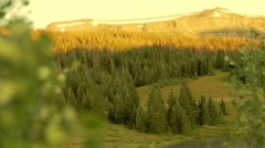 Sunrise Over MTN Forest Stock Footage