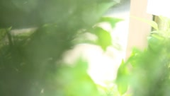 Plants and Herbs - Focus Roll Stock Footage