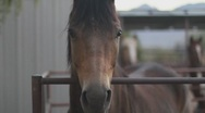 Stock Video Footage of Horses - frontal long face close