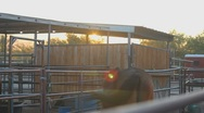 Stock Video Footage of Horses - sunrise smacking tail