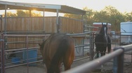 Stock Video Footage of Horses - a pair at sunrise