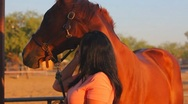 Stock Video Footage of Brunette woman and her horse close ups - 4