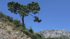 Stock Video Footage of Andalusia lone pine and rocks