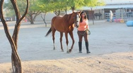 Stock Video Footage of Brunette woman and her horse - 7