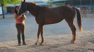 Stock Video Footage of Brunette woman and her horse - 6