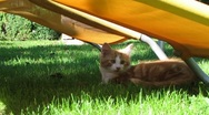 Cats playing in the Garden Stock Footage