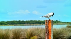 Coastal bird on water level guage 02 Stock Footage