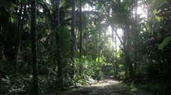 Stock Video Footage of Ancient Island Jungle Path