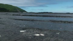 Alaska Shore Seashells - stock footage