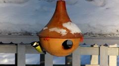 Bird feeder house Tit mice bird eating in window Stock Footage