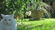 Stock Video Footage of Cats playing in the Garden