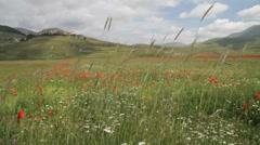 scene in the summer of Castelluccio di Norcia - stock footage