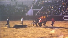 Killed Bull Dragged from Arena 1975 (Vintage Film 8mm Home Movie) 479 Stock Footage