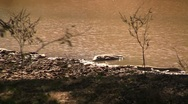 Crocodile in river Stock Footage