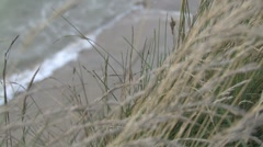 Close up on grass with Ocean in background HD Stock Footage