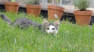 Stock Video Footage of young cat on grass
