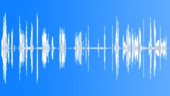 Malamute Alaskan Huskies  screaming, exterior. Sound Effect
