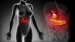 Female BILIARY anatomy details black x-ray loop Stock Footage