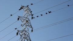 Electric pole,birds,Birds on the wire Stock Footage