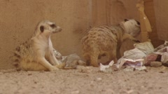 Mercat Stock Footage