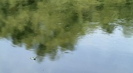 River in all its glory Stock Footage