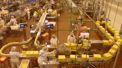 Cheese Factory Workers Real Time Stock Footage
