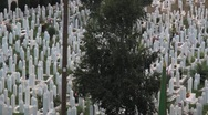 Stock Video Footage of Graveyard. Sarajevo. pan.3