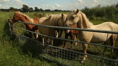 Group or horses Stock Footage