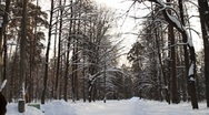 Moscow Scene Forest Park Stock Footage