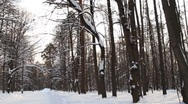 Pan-right shot of Moscow Scene Forest Park Stock Footage