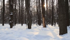Beautiful sparkling sunlight between trees in Moscow Stock Footage