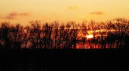 Beautiful sunset behind the trees at a park in Moscow Stock Footage