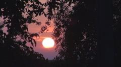 Beautiful sunset among trees - stock footage