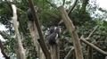Colobus Monkeys, Running, Jungle Trees, Palm Tree HD Footage
