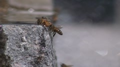 Bees landing on the water with drops from the waterfall Stock Footage