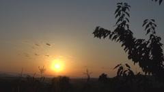 Beautiful sunset among tree and corn - stock footage