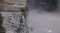 Bees plaing in the water Stock Footage