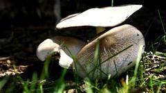 Wild mushrooms Stock Footage