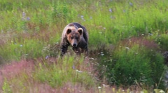 Stock Video Footage of Bear Country Preserve
