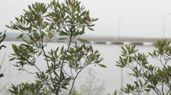 Stock Footage - James River at Jamesport Settlement, Virginia Stock Footage
