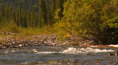 Elbow river tight and forest in bg #1 Stock Footage