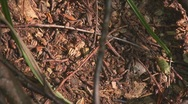 Anthill 3 Stock Footage