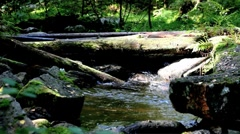 Timber bridge Stock Footage
